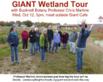 Giant Wetland:  Walk This Way